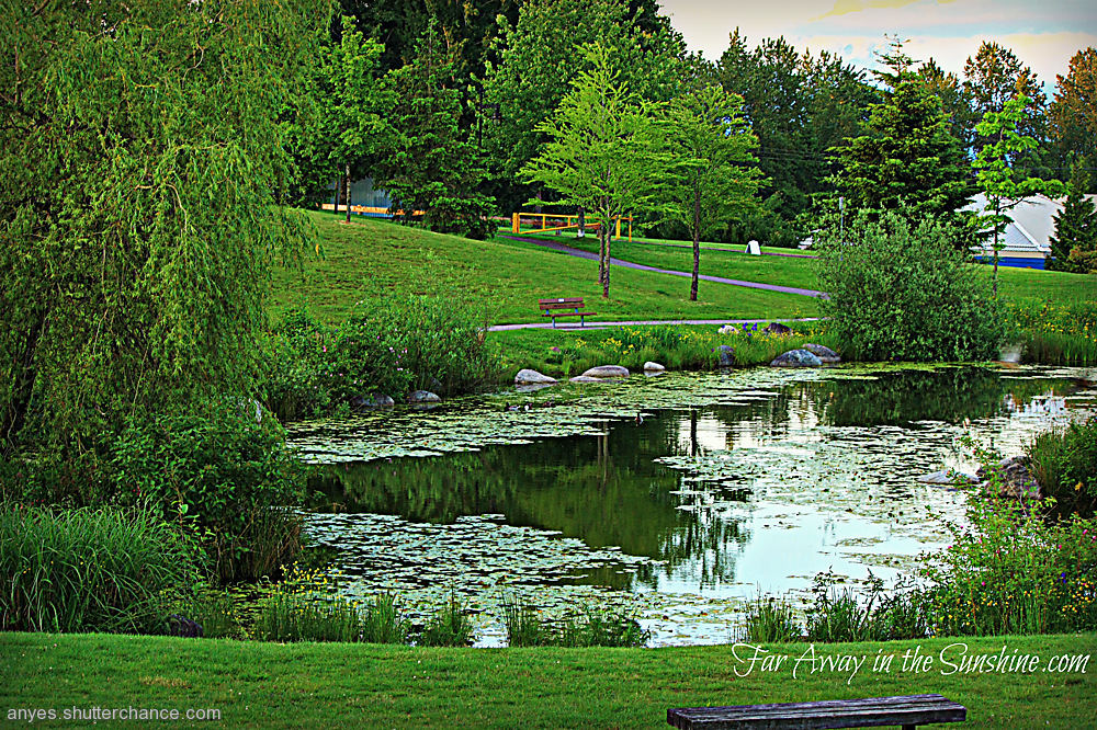 photoblog image The bench by the pond.png